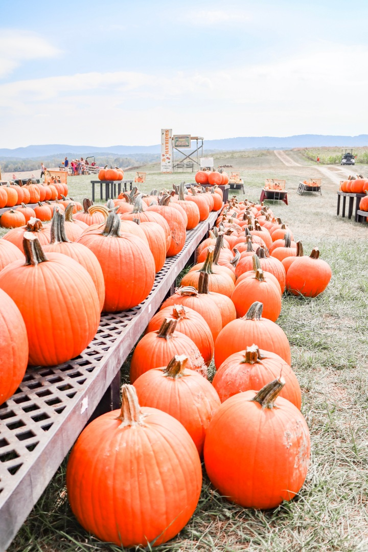 Tips for Picking Pumpkins to Decorate with + our Trip to the Local Pumpkin Patch