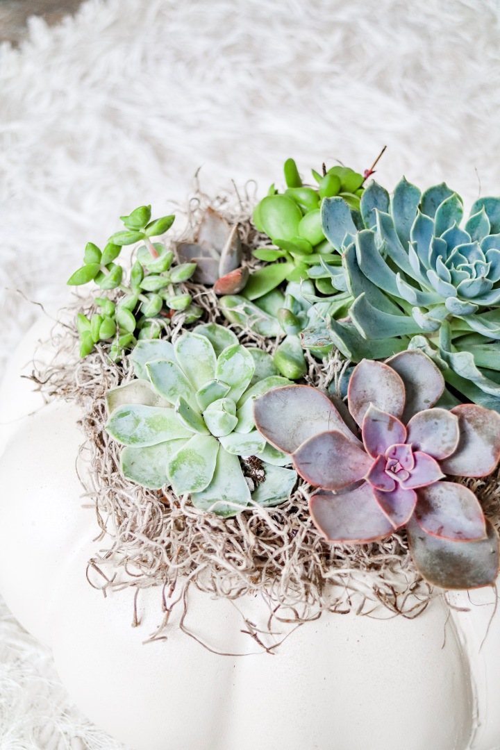 DIY Craft Pumpkin + Live Succulent Planter